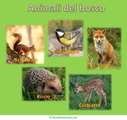 Favole per bambini animali del bosco - Immagini di animali da stampare gratuitamente ...